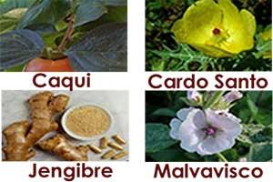 ingredientes del te divina
